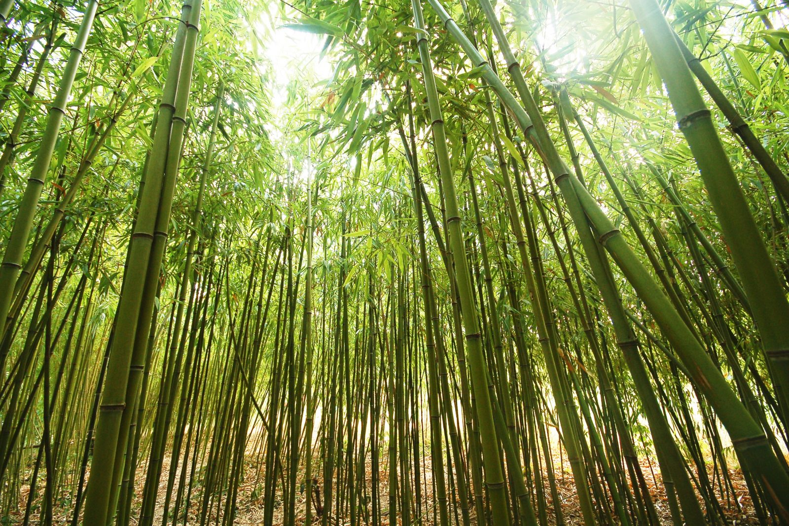 history of bamboo Ready to say goodbye to spreadsheets start a free trial or take a quick tour of bamboohr's easy-to-use human resource software for small and medium businesses.