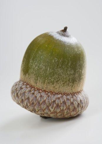 An acorn