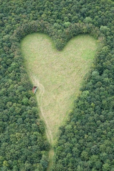 An opening in the forest in a shape of a heart