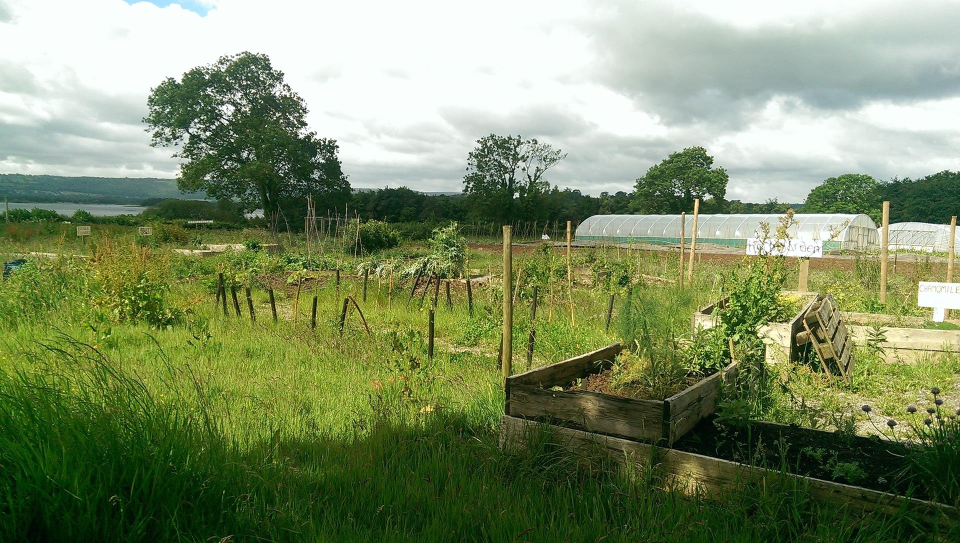 THE COMMUNITY FARM X SUSTAINABLE KITCHENS 1920