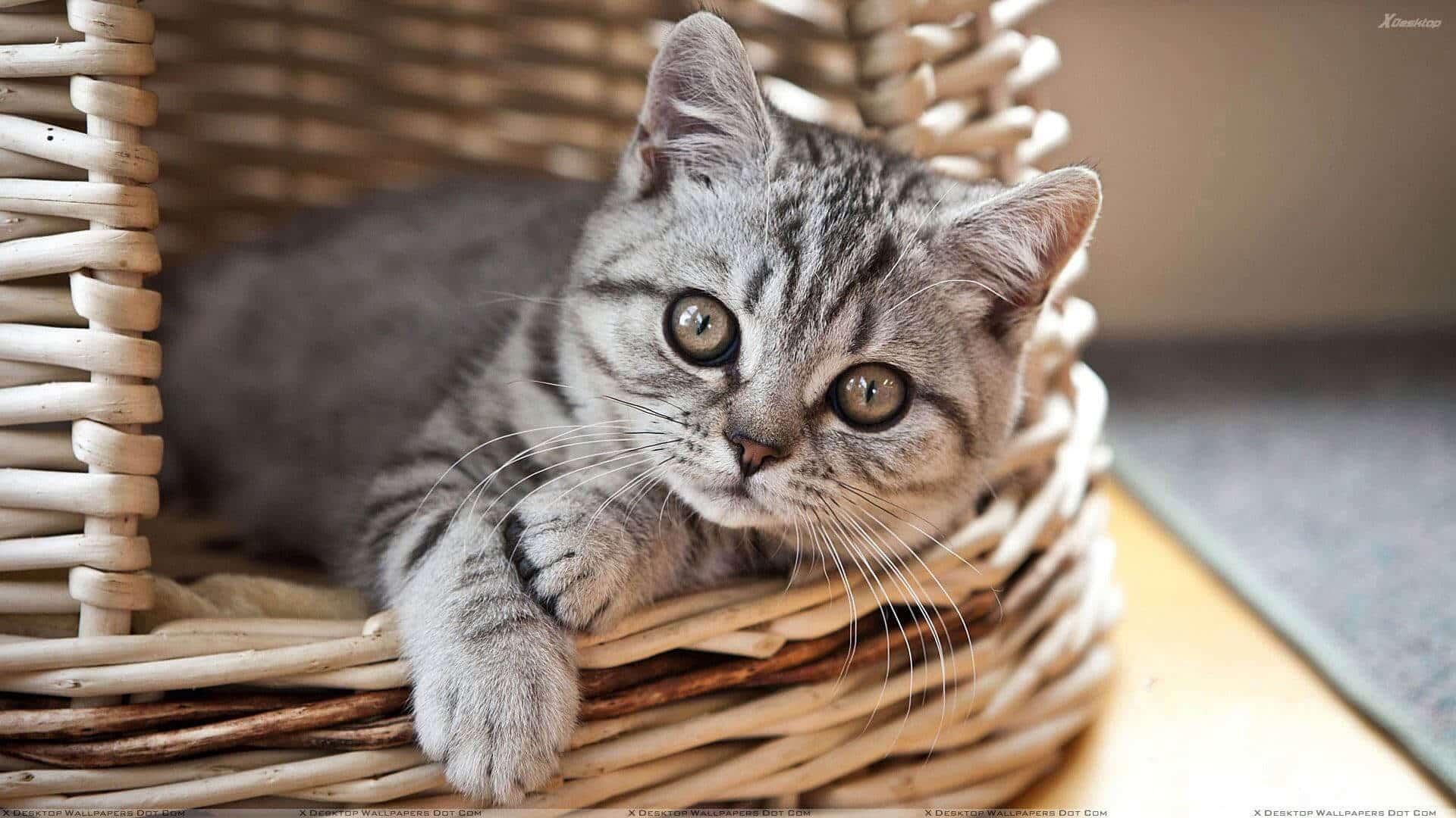 CAT CUPBOARD